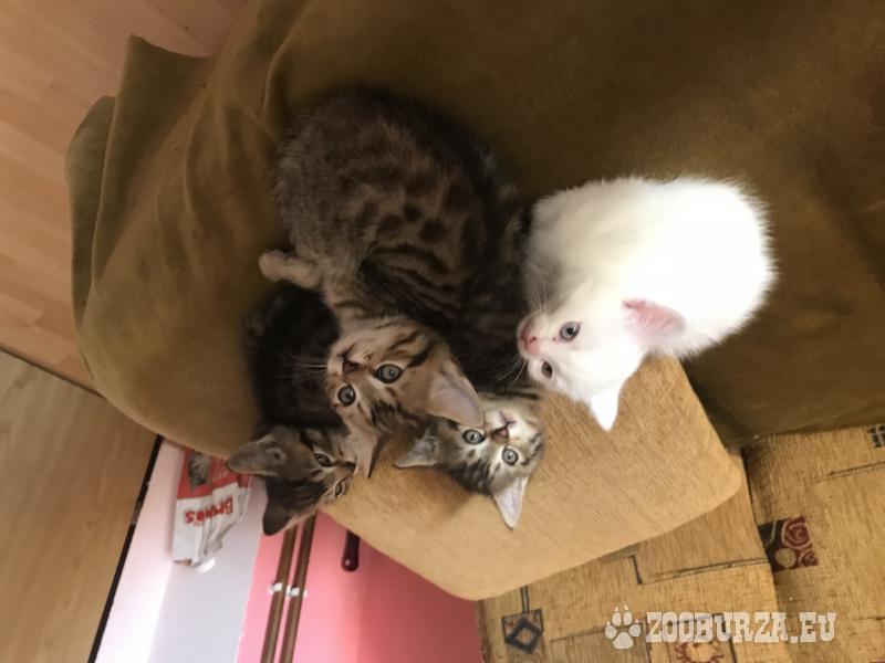 Pekné mačiatka