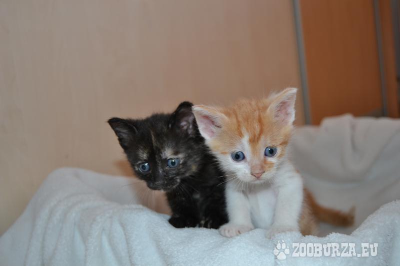 Darujeme krásne mačiatka