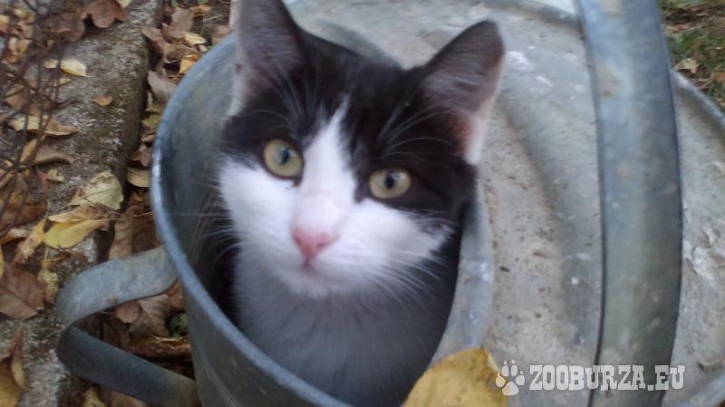 Prekrásne mačiatko si hľadá novy domov