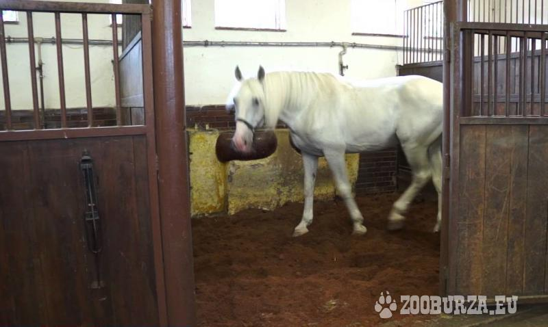 EKO sterilní podestýlka pro koně