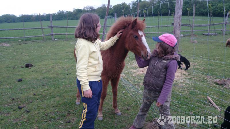 Kobyla Lara - Pony