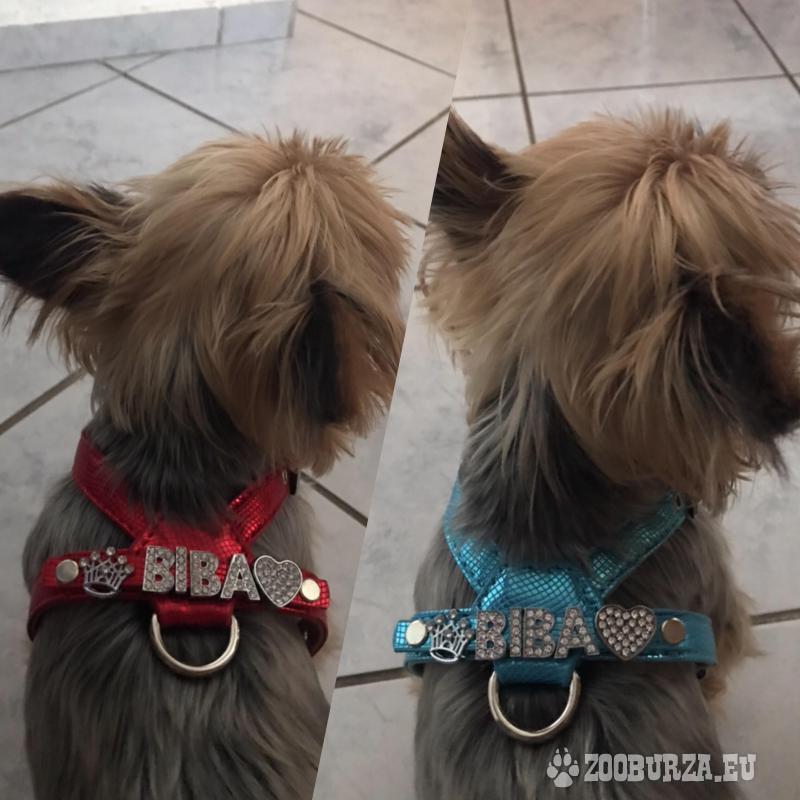 Luxusné popruhy s menom pre psíka