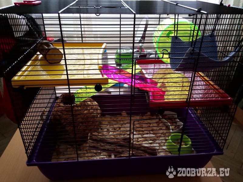 Klietka s potkanom