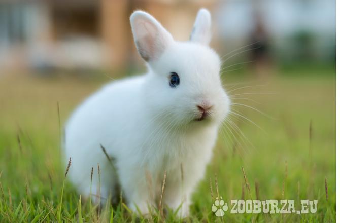 Krásne zdrobnené králičky - rôzne pohlavie