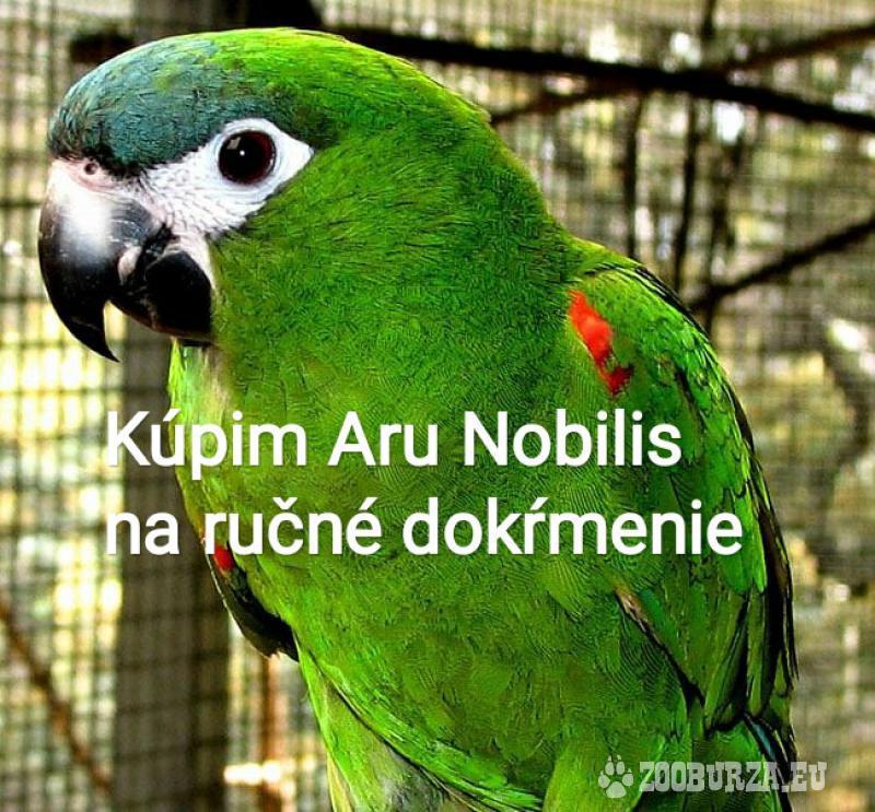 Kúpim Aru Nobilis