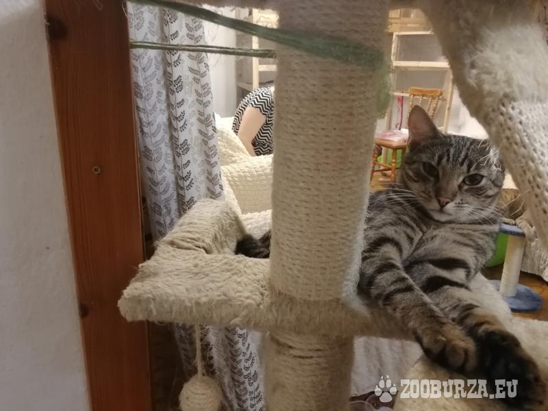 Darujeme 8-mesačné mačiatka