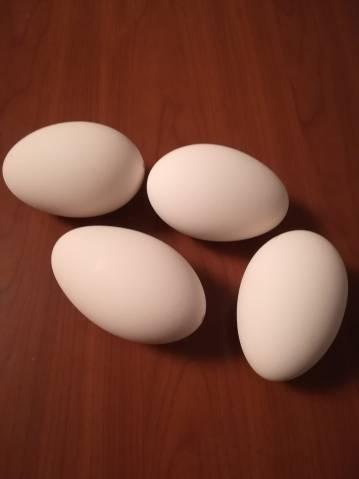 Predám husacie vajcia vyfúknuté