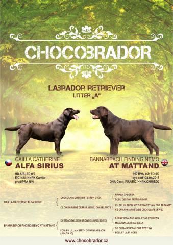 Čokoládová štěňátka Labradorského retrievera s PP