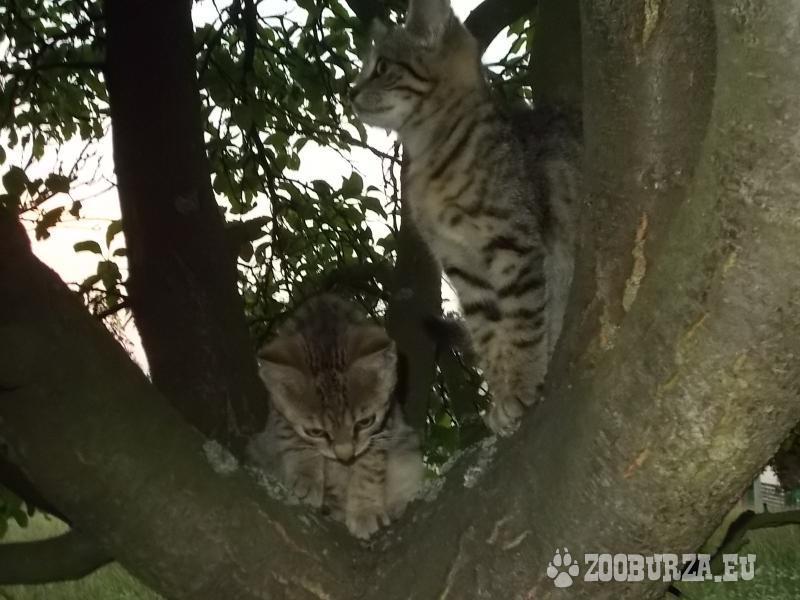 Odolné venkovské kočičky