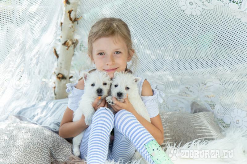 West Highland White Terrier, Zapraszamy Do Rezerwa