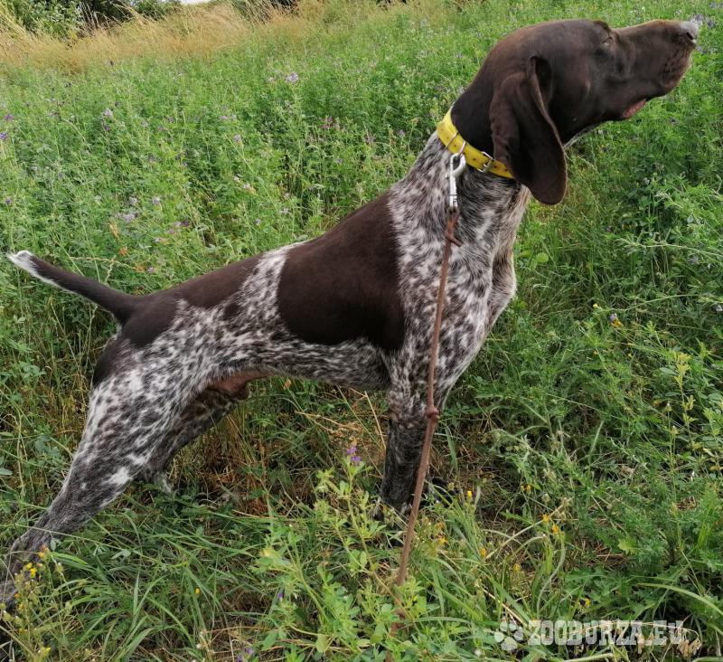 NKS - pes poľovne upotrebiteľný