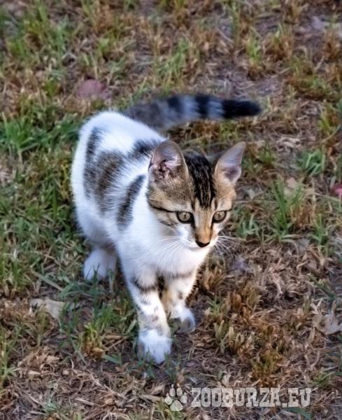 Kočičí rodina hledá útočiště