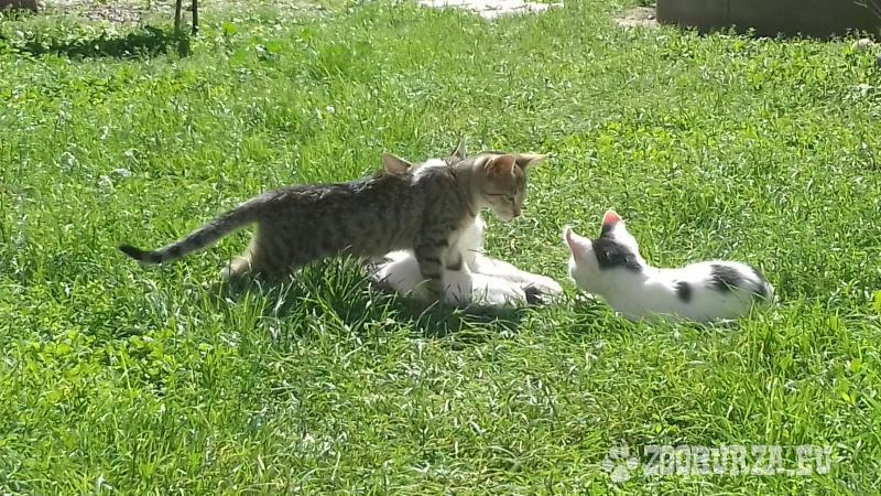 Darujeme mačiatka