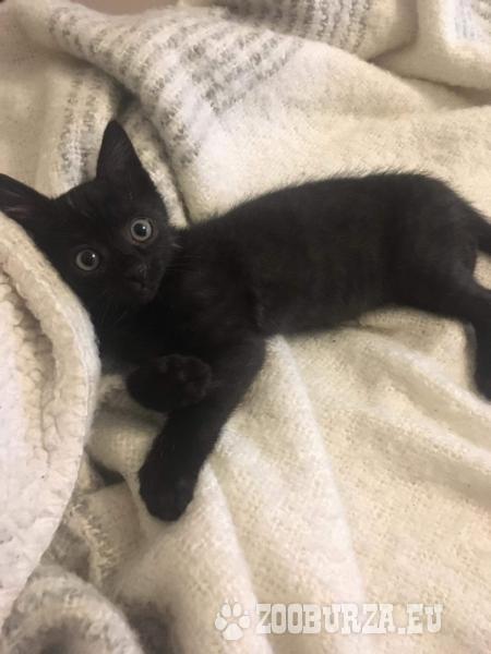 DARUJEME malé mačiatko