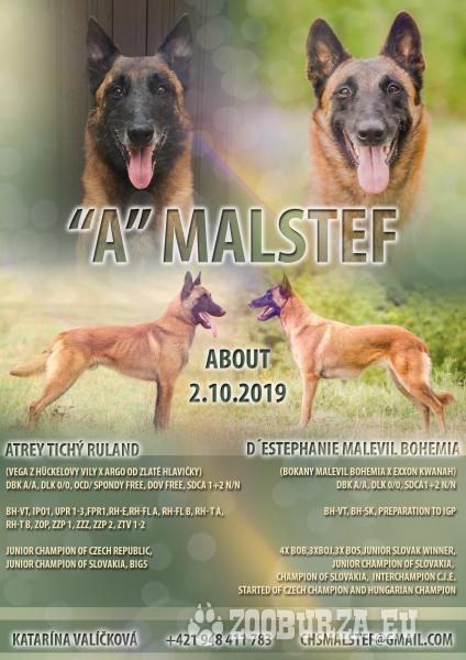 Belgicky ovciak-malinois a tervueren