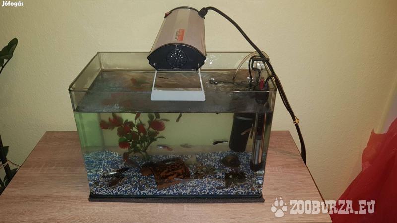 Alkuképes; Akvárium vízmelegítővel, vízszűrő. stb.