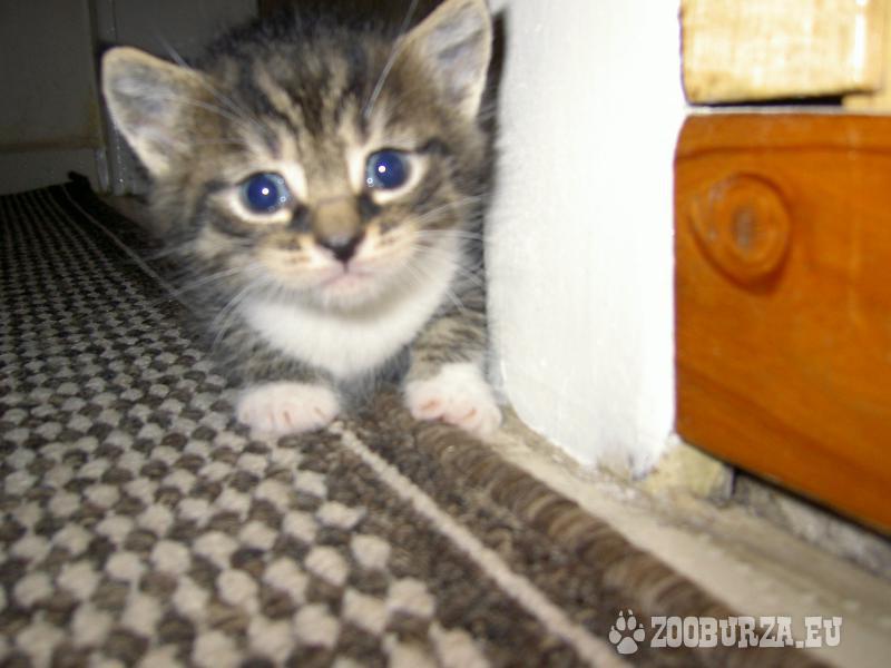 DARUJI koťátka odběr prosinec