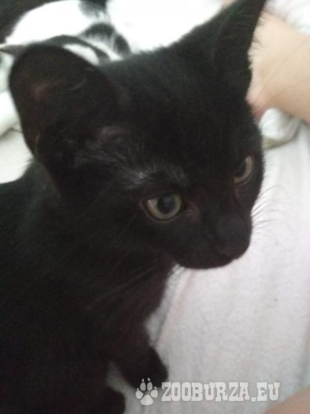 Koťátka k odběru v Brně