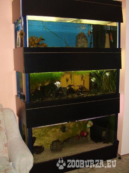 Akvarijní stěna
