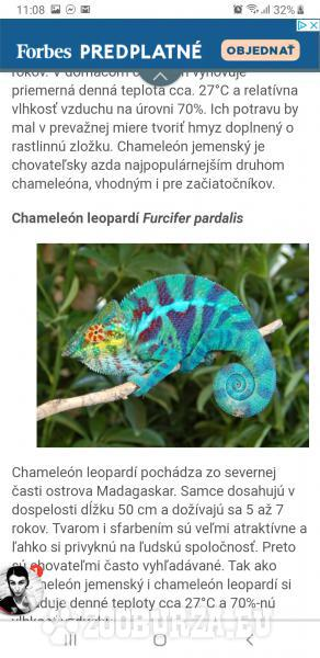 Chameleón leopardí Furcifer pardalis