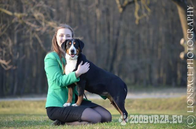 Entlebušský salašnícky pes