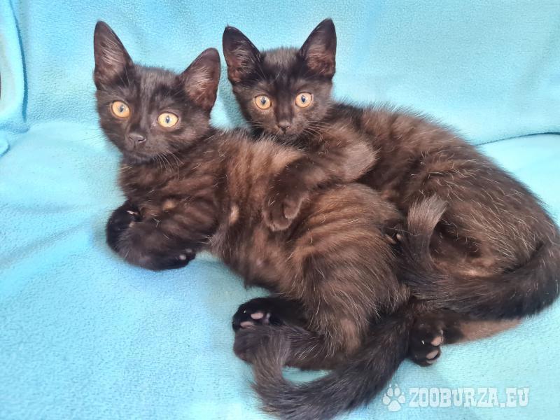 Bajka i Bójka z Fundacji Miasto Kotów