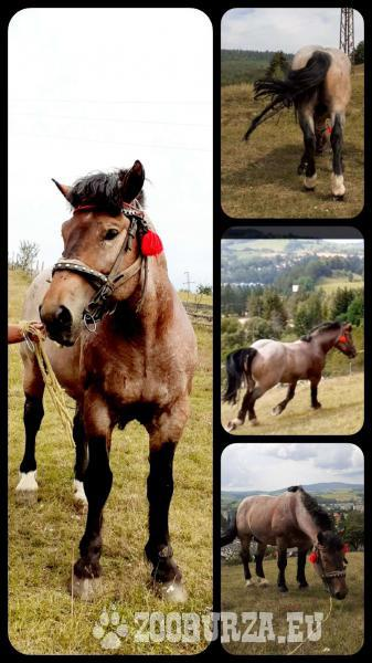 Žrebec