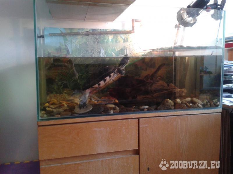Akvárium na želvu + vybavení