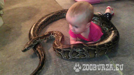 Hady do videoklipu