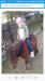 Prodám dva pony