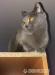 mačka - Darovanie