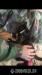 Darujem 3-mesačné mačiatko (mačka) do dobrých rúk  - Predaj